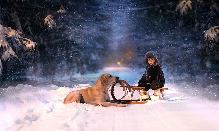 Çocuk Köpek Kızak Fotoğraf