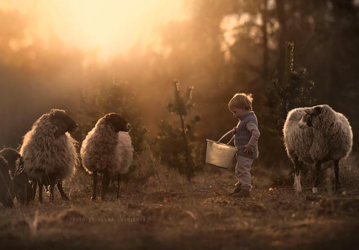 Çocuk Koyunlar Fotoğraf