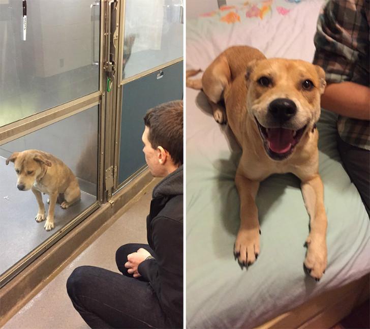 evlat edinilen mutlu köpek