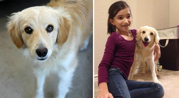 köpek ve kız