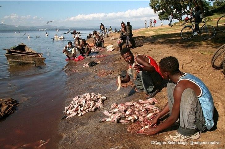 Etiyopya Awassa Gölü Balıkçılar