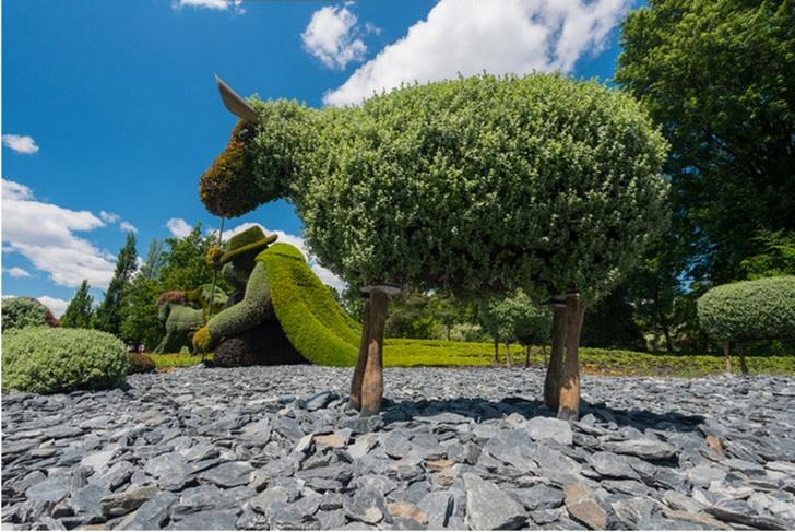 Bitki Budama Koyun