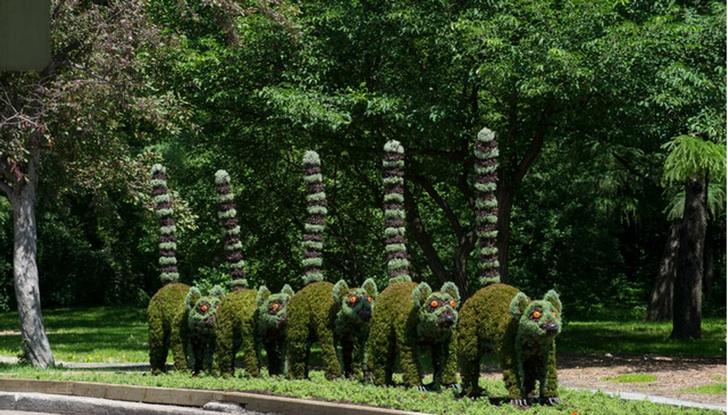 Bitki Budama Lemurlar