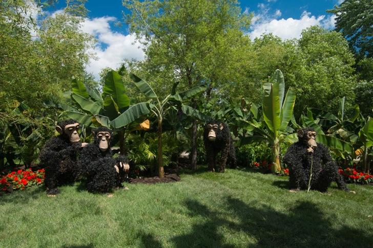 Bitki Budama Maymunlar