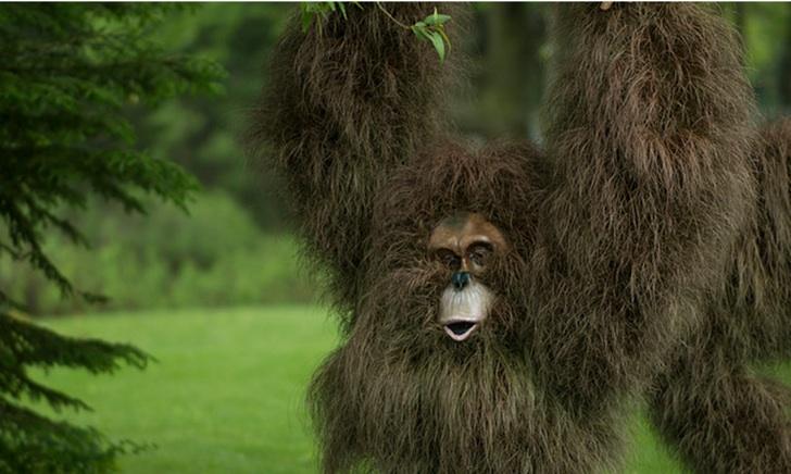 Bitki Budama Orangutan