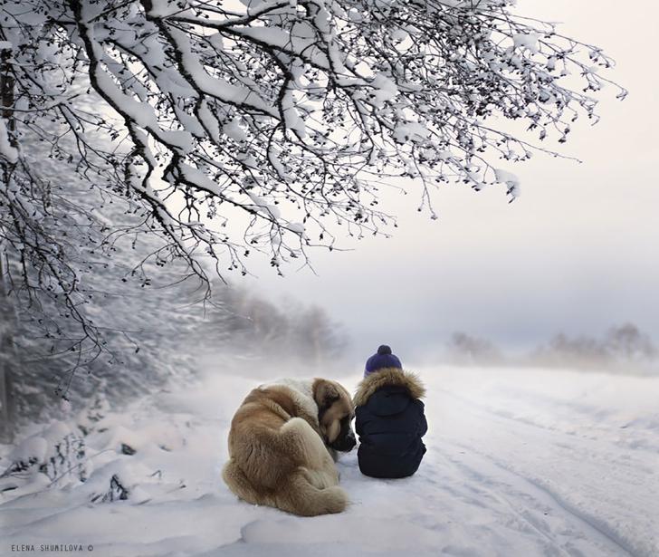 Köpek Çocuk Kar Ağaç