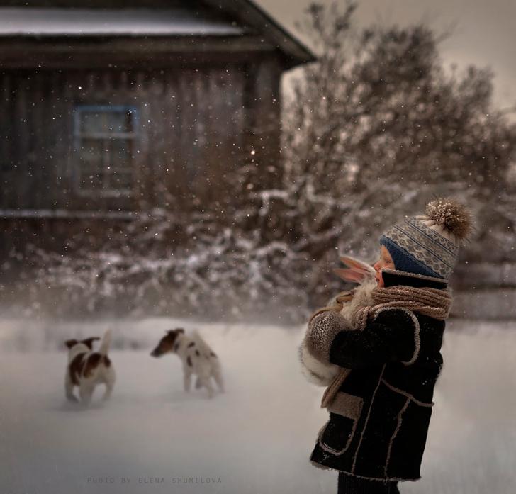 Köpekler Tavşan Çocuk Kar Fotoğraf