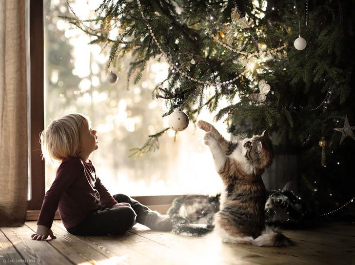 Kedi Çocuk Çam Ağacı Fotoğraf