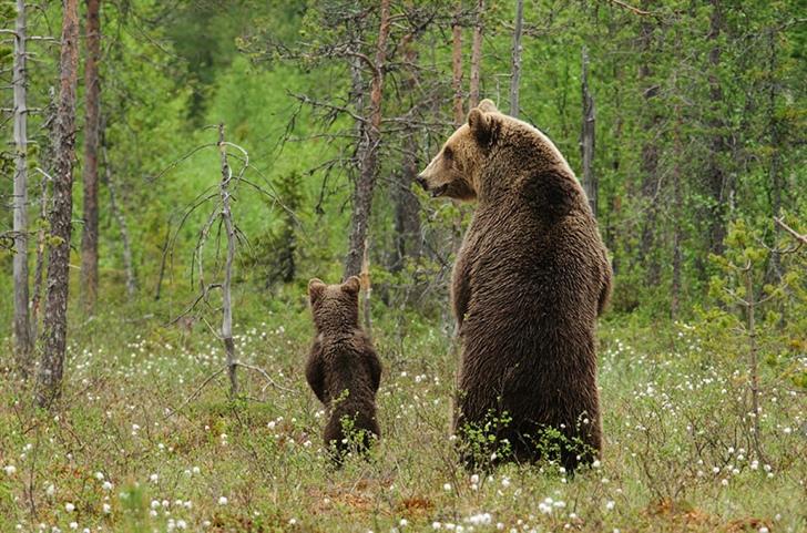 ayı ve yavrusu