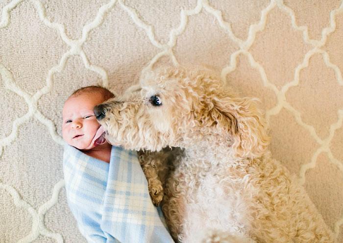 köpekler ve bebekler fotoğraf