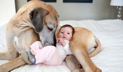 kopekler ve bebekler fotograf
