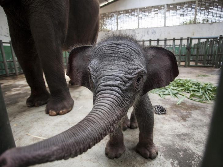 sumatra fili