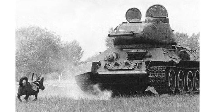 tank savar köpek silah