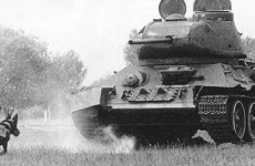 tanksavar köpek silah canli bomba