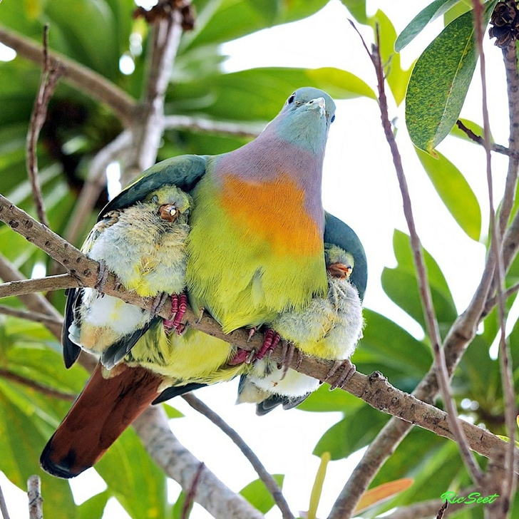 kuş ve yavruları