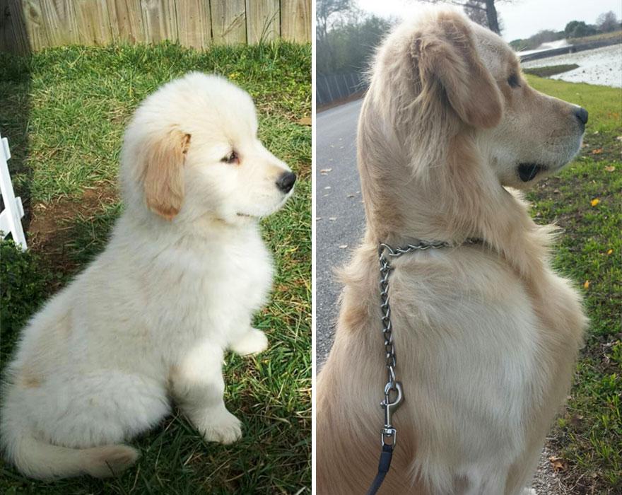 2 yıl içinde büyüyen köpek