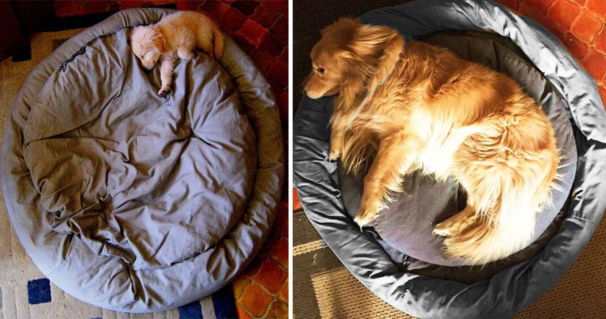 1 yıl içinde köpeğin büyümesi