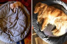 1 yılda büyüyen köpek