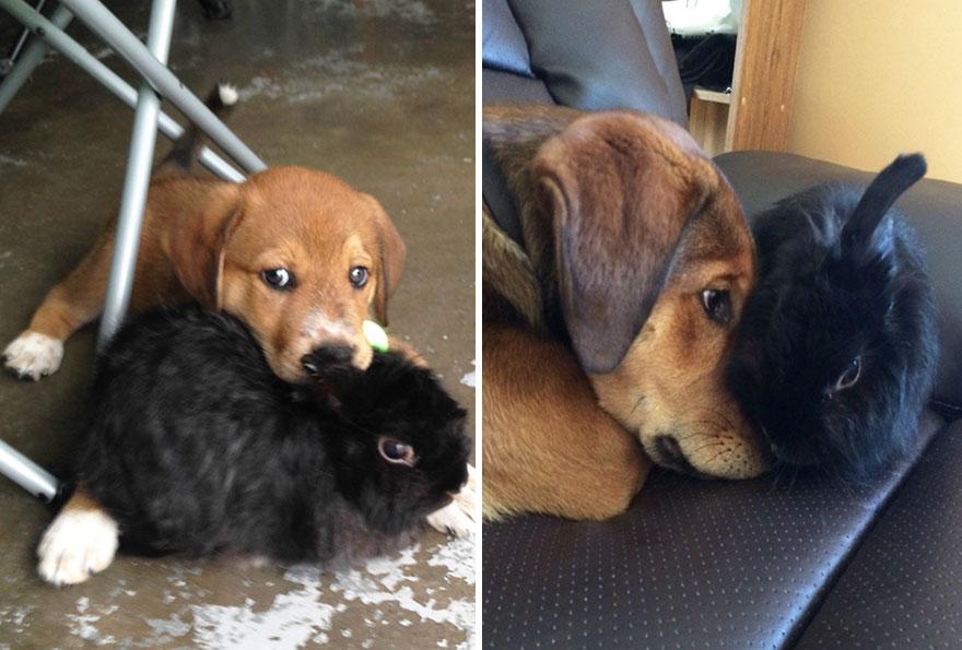 kahverengi ve siyah köpek