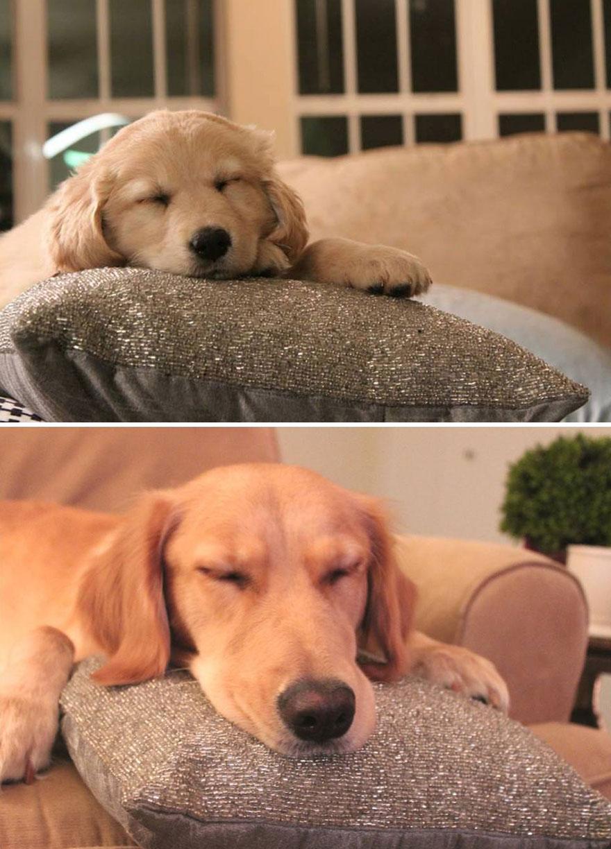 1 yıl içinde kocaman olan köpek