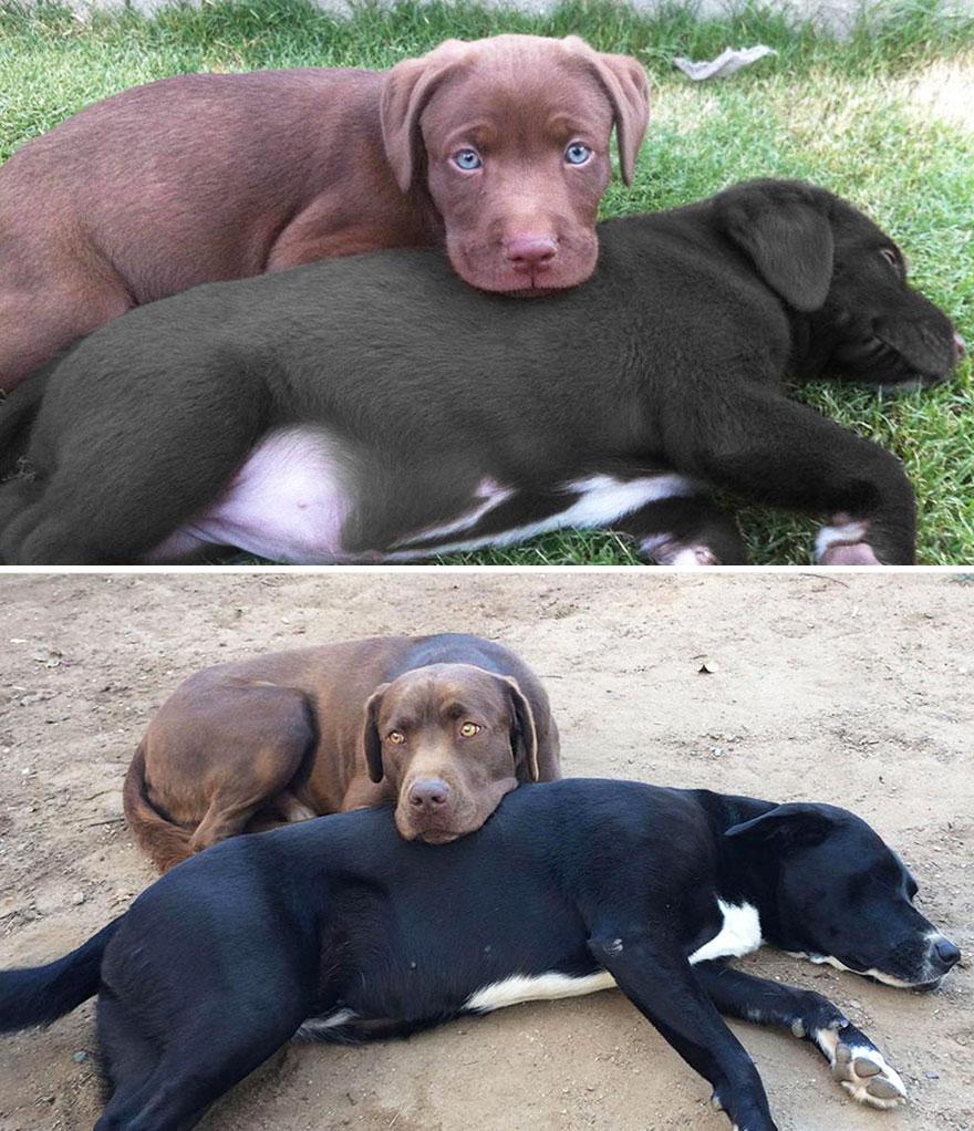 birbirine sarılan köpekler