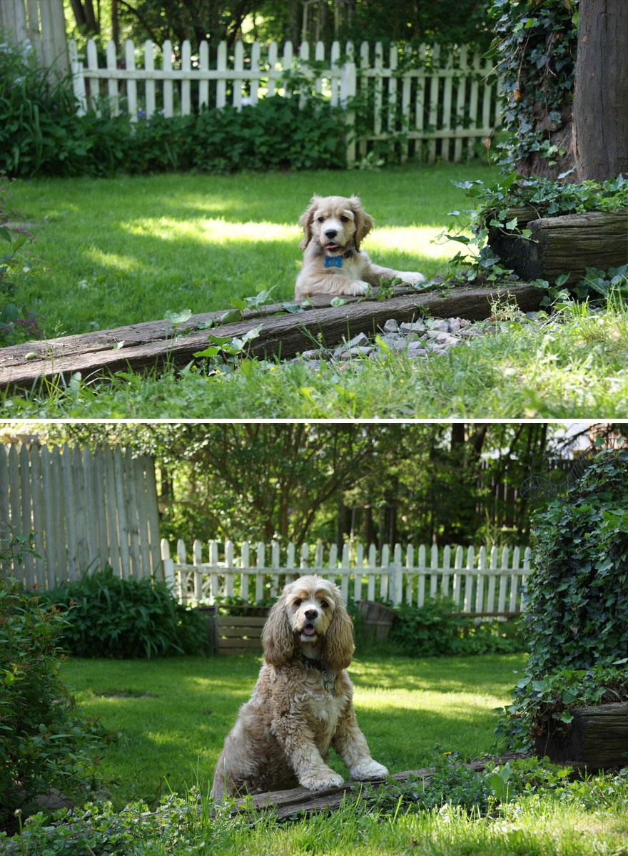 şaşkın köpek