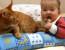 bebek ve kuyruğunu ısıran kedi