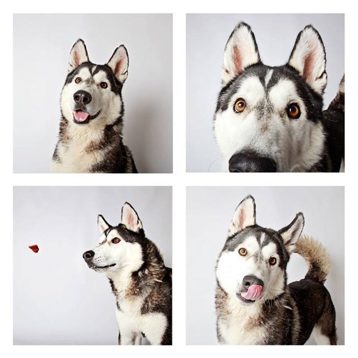 köpek profil fotoğrafı