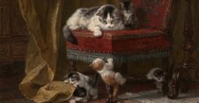 kedi sanat edebiyat şiir