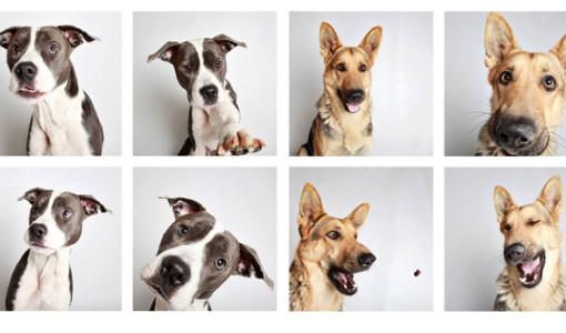 köpekler fotoğraf