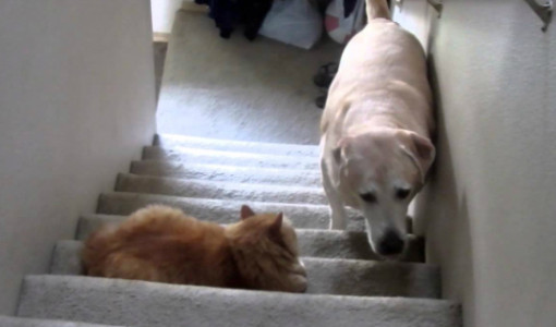 kedilerden korkan köpekler