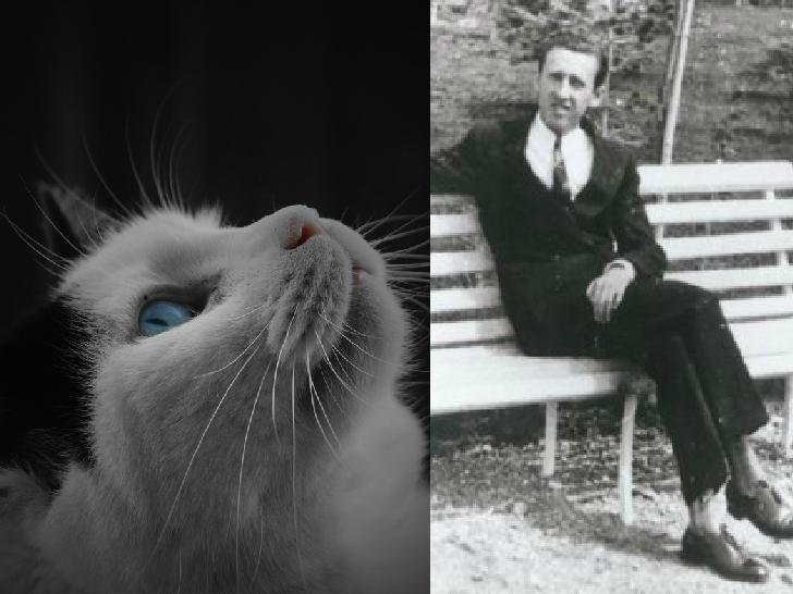 orhan veli kedi