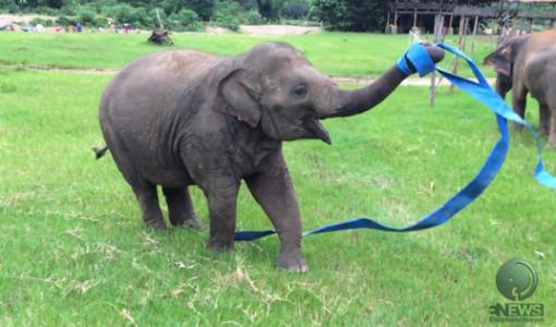 oynayan sevimli fil