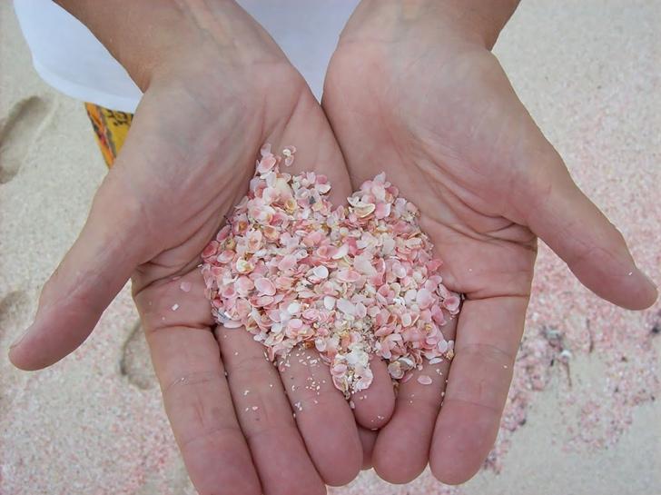 pembe sahiller bahamalar 2