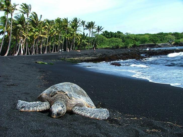 siyah kumlar punaluu sahil hawaii