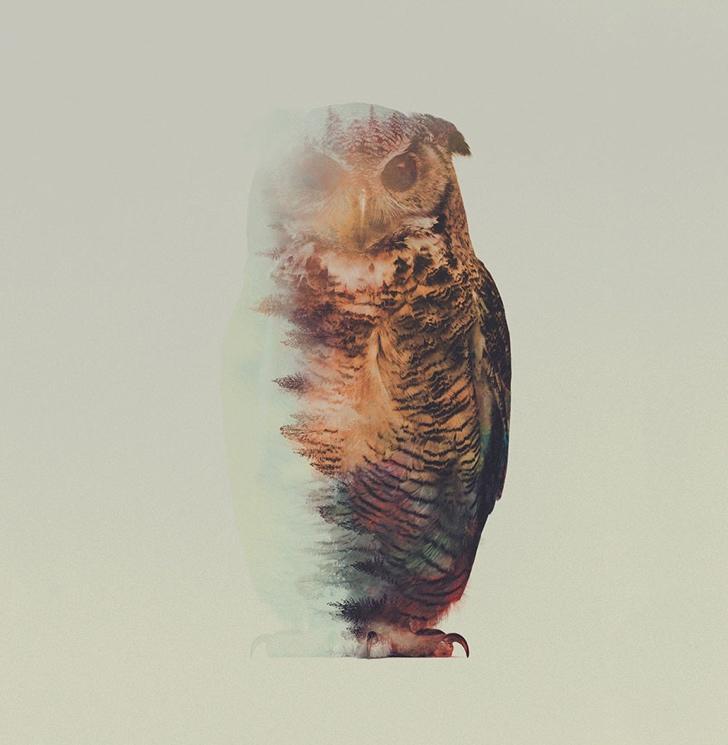baykuş fotoğrafı resmi