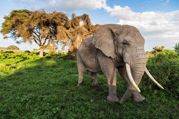 fil fotoğrafı kenya