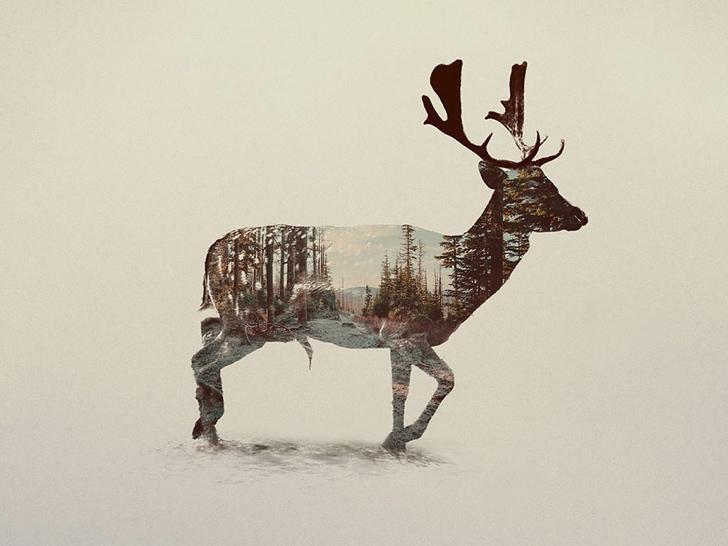 geyik fotoğrafı resmi