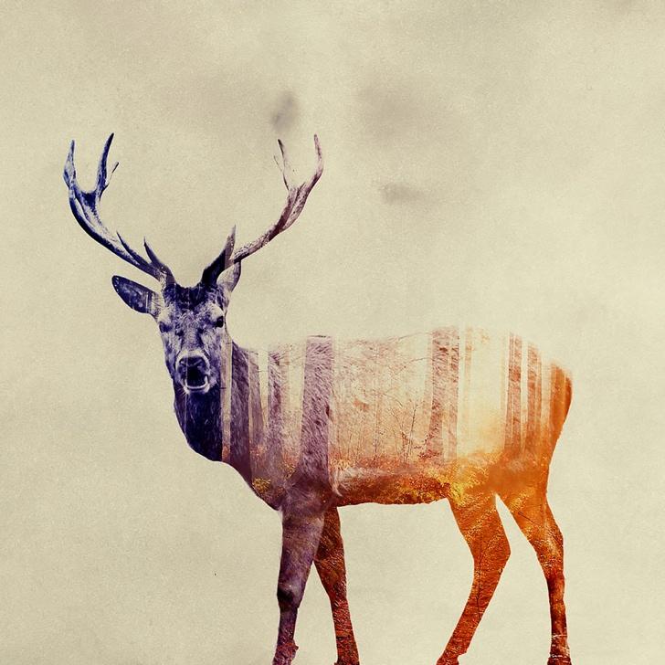 geyik fotoğrafı resmi 3