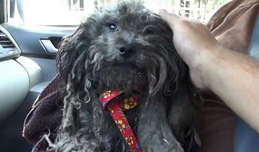 kurtarılan evsiz kaniş köpeği