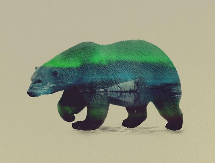 kutup ayısı fotoğrafı resmi