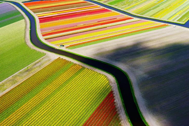 lale tarlaları hollanda