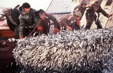 türkiyenin balık çeşitleri