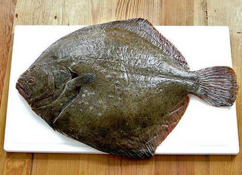 kalkan balığı