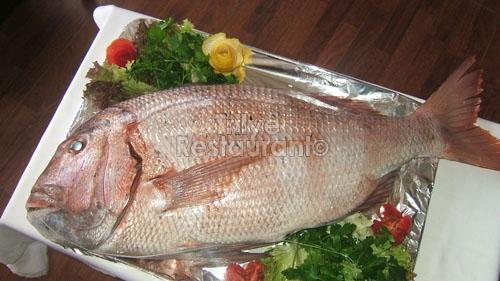 trança balığı