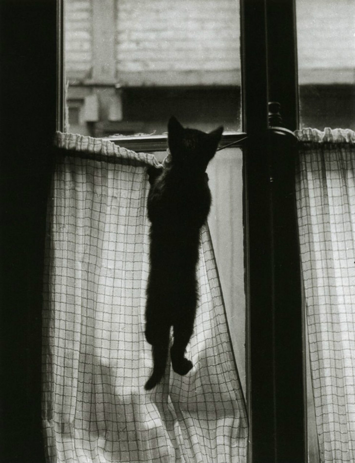Willy Ronis, La Fenêtre Paris, 1954