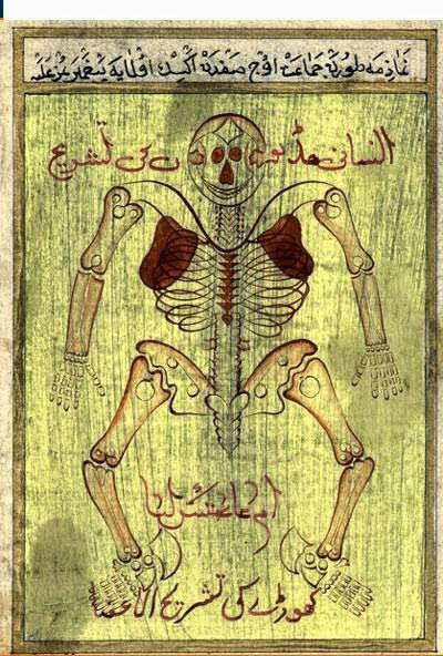 İbn-i Sina'nın çizimiyle insan anatomisi
