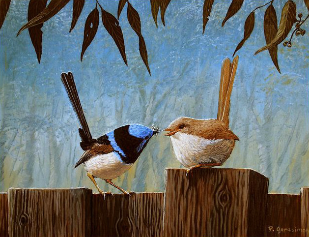 Peter Gerasimon - Blue Wren Gorgeous