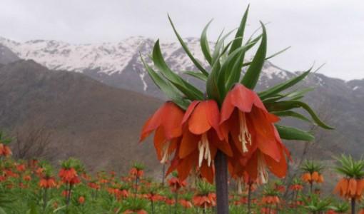 endemik bitkiler