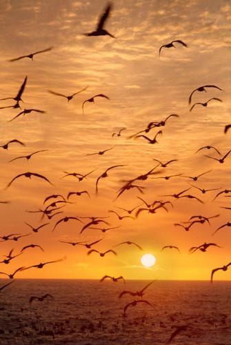 güneş alıntılı şiirler